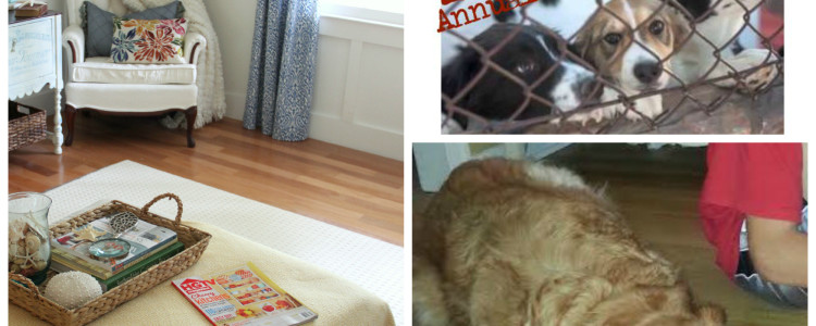 Animal Shelter Thrift Benefit {a donation, new rug and more}