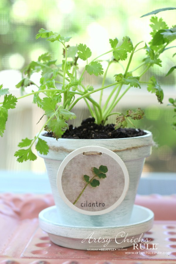DIY Decorative Clay Pots for Herbs - Cilantro -artsychicksrule.com