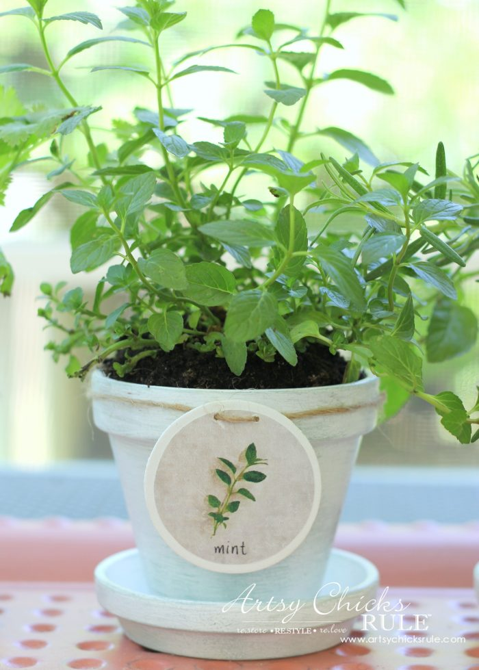 diy decorative clay pots with herbs decorating challenge