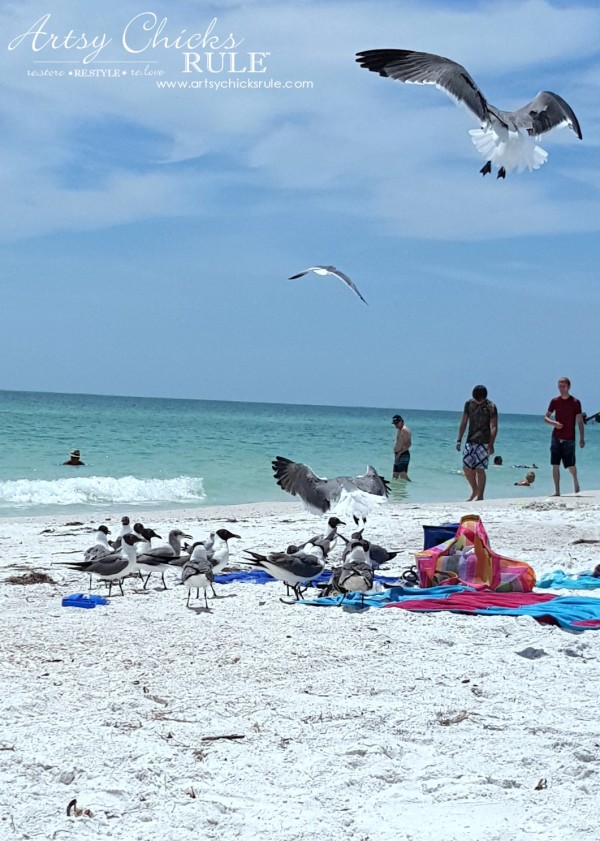 Anna Maria Island Florida Vacation - please don't feed the seagulls y'all - artsychicksrule