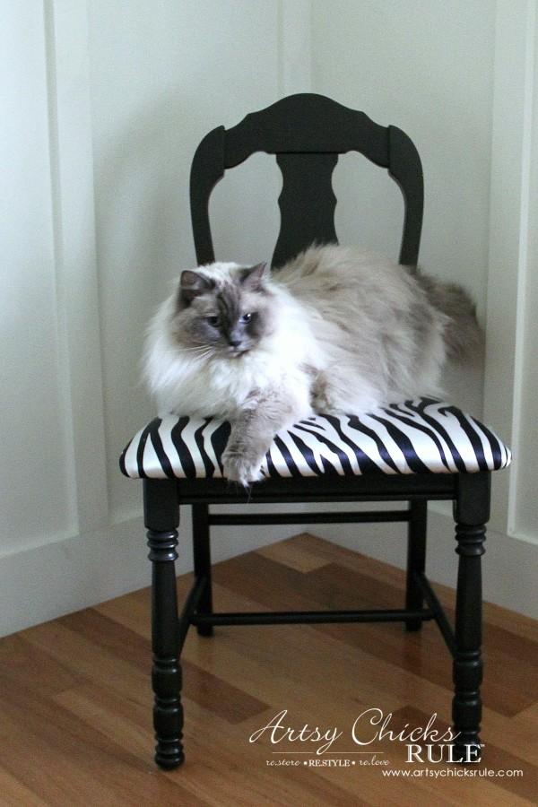 Zebra Chair Makeover (Animal Theme)  - Beau Kitty Ragdoll cat - $5 dollar thrifty makeover - artsychicksrule