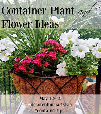 Container & Planter Ideas