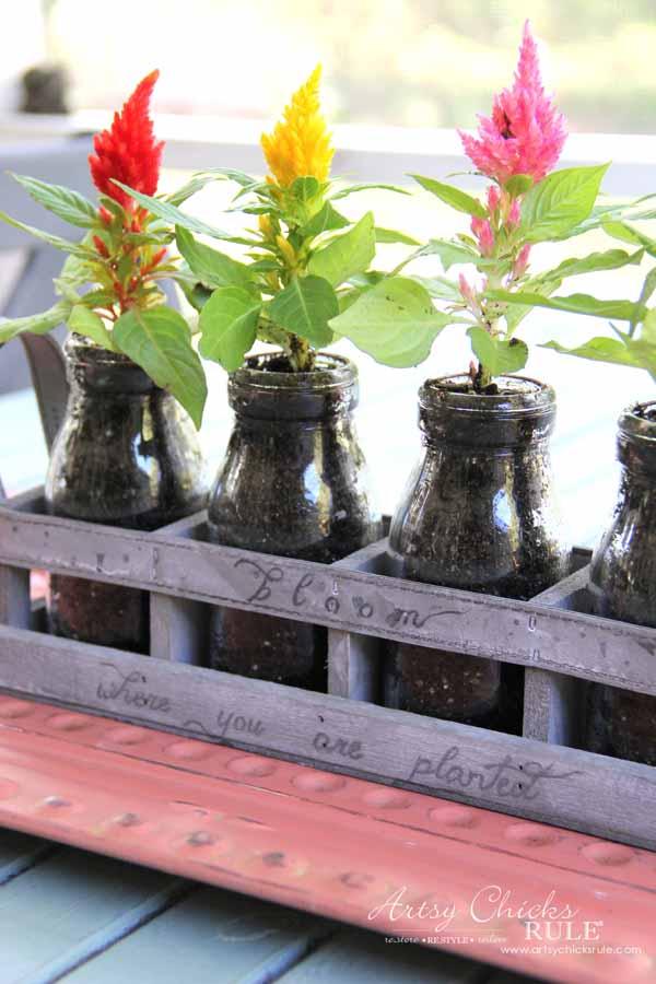 Decorating with Potted Plants - Unique Planter Ideas - PRETTY CELOSIA - artsychicksrule #pottedplants #planterideas